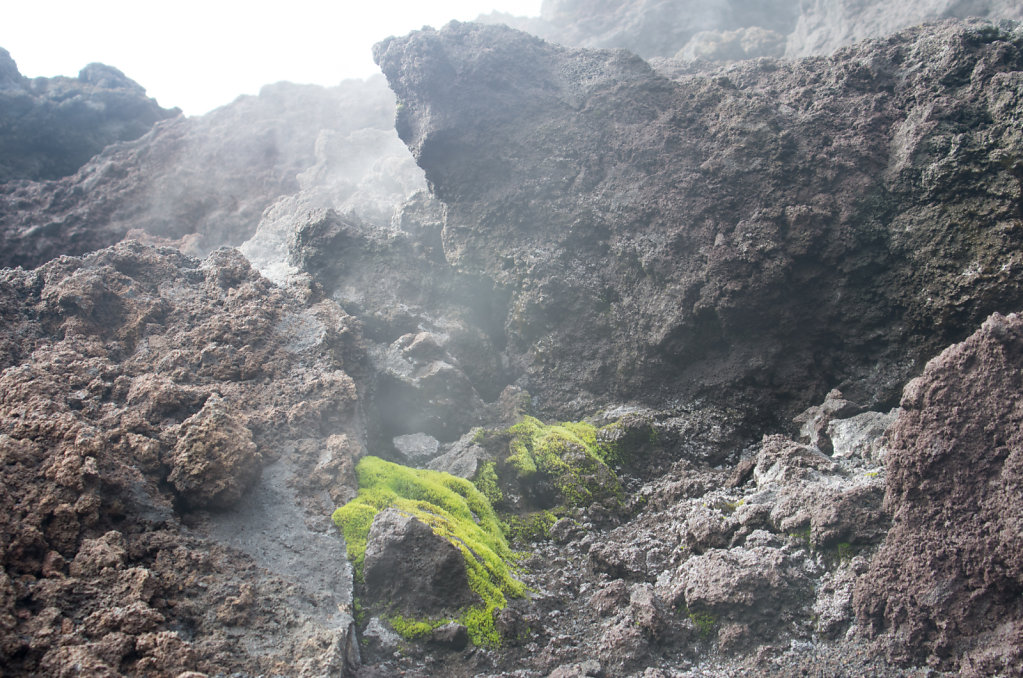 life in the fumarole